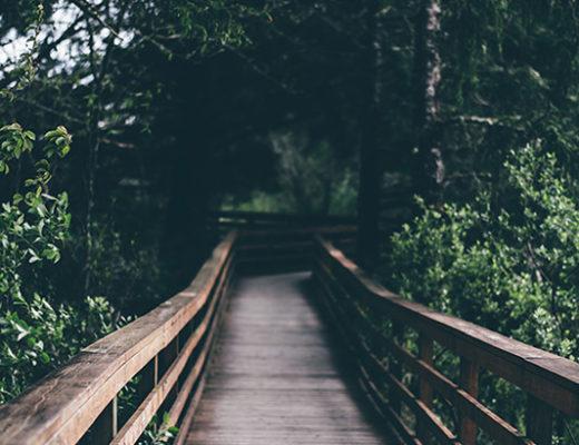 pont livre sara elodie garnier